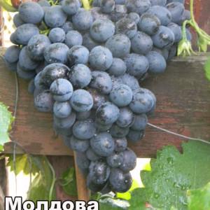 moldova003